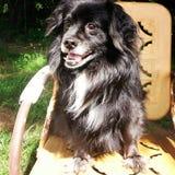 Pies w słońcu fotografia royalty free