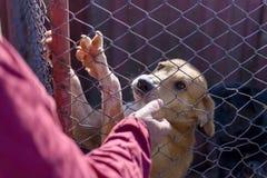 Pies w schronieniu Fotografia Stock
