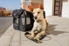 Pies w transportu pudełku przygotowywających podróżować torbie lub fotografia royalty free