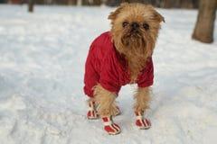 Pies w ubraniach i butach Obrazy Stock