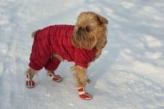 Pies w ubraniach i butach Obraz Stock