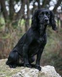 Pies w Wiejskim położeniu Zdjęcia Stock