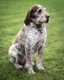 Pies w Wiejskim położeniu Obrazy Royalty Free