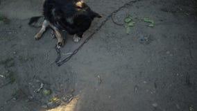 Pies w wiosce zbiory