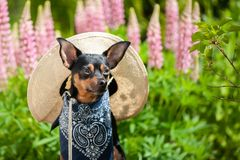 Pies w wizerunku rolnik, horticulturist, kwiatu hodowca Fotografia Stock