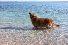 Pies w wodzie Zdjęcia Royalty Free