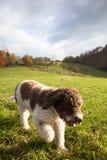 Pies w wsi Obraz Royalty Free