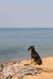 Pies w wymarłym ognisku na plaży Obraz Royalty Free