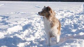 Pies w zima krajobrazie obraz stock