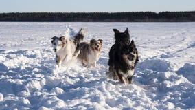 Pies w zima krajobrazie fotografia stock