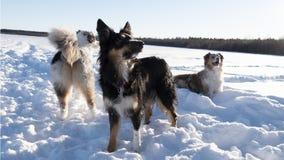 Pies w zima krajobrazie obrazy royalty free