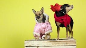 Pies w zimie odziewa zbiory