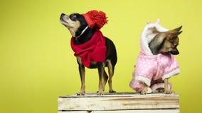 Pies w zimie odziewa zbiory wideo