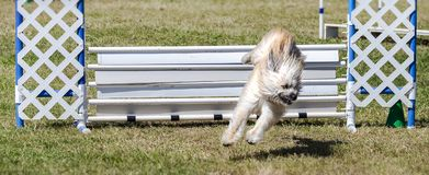 Pies wokoło lądować Obraz Royalty Free
