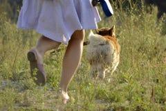Pies wykonuje rozkazy właściciel Corgi pembroke fotografia royalty free