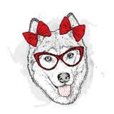 Pies z łękami również zwrócić corel ilustracji wektora Śliczny husky ilustracji