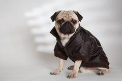 Pies z brown kurtką Zdjęcia Royalty Free