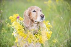 Pies z bukietem kwiaty, 2017 Fotografia Stock