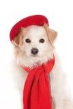 Pies z czerwoną nakrętką i szalikiem Fotografia Royalty Free