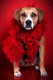 Pies z czerwonym szalikiem Zdjęcia Royalty Free