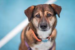 Pies z ekspresyjnymi oczami i brwiami zdjęcie royalty free
