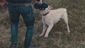 Pies z Frisbee zdjęcie wideo