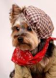 Pies z kapeluszem Zdjęcia Stock