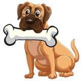 Pies z kością Zdjęcia Royalty Free