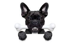 Pies z kością fotografia stock