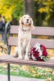 Pies z kwiatami na ławce Ukrein 2019 zdjęcia royalty free