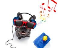 Pies z muzycznymi słuchawkami obraz stock