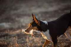 Pies z Ogromną kością zdjęcie royalty free