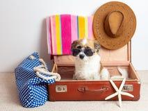 Pies z okularami przeciwsłonecznymi na podróży skrzynce obraz royalty free