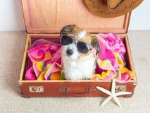 Pies z okularami przeciwsłonecznymi na podróży skrzynce obrazy royalty free