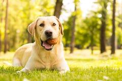 Pies z piłką w usta Zdjęcia Royalty Free