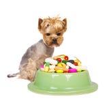 Pies z pigułkami Obrazy Stock