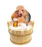 Pies z piwnym kubkiem Fotografia Stock