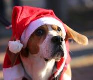 Pies z Red Hat Święty Mikołaj Fotografia Stock