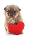 Pies z sercem Obrazy Royalty Free