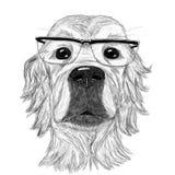 Pies z szkłami Zdjęcia Stock