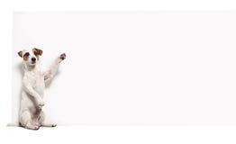 Pies z sztandarem obraz stock