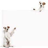 Pies z sztandarem zdjęcia royalty free