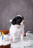 Pies z tortem Zdjęcia Royalty Free