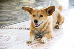 Pies z uśmiechem Zdjęcia Royalty Free