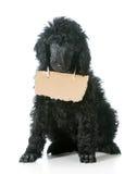 Pies z wiadomością Obrazy Royalty Free