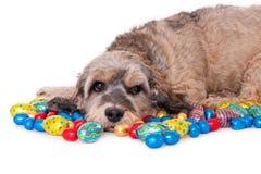 Pies z Wielkanocnymi jajkami obraz royalty free