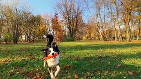 Pies z zabawką przy parkiem zbiory wideo