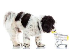 Pies z zakupy trolly odizolowywającym na białym tło psie Zdjęcie Royalty Free