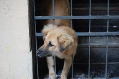 Pies za bramą Obraz Royalty Free