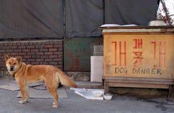 pies zagrożenia Zdjęcia Royalty Free